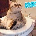 НОВЫЕ ПРИКОЛЫ КОТОВ! Приколы с Котами - Смешные коты и кошки 2019 ТЕСТ НА ПСИХИКУ ПРОБУЙ НЕ СМЕЯТЬСЯ видео