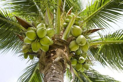 масло кокоса для волос