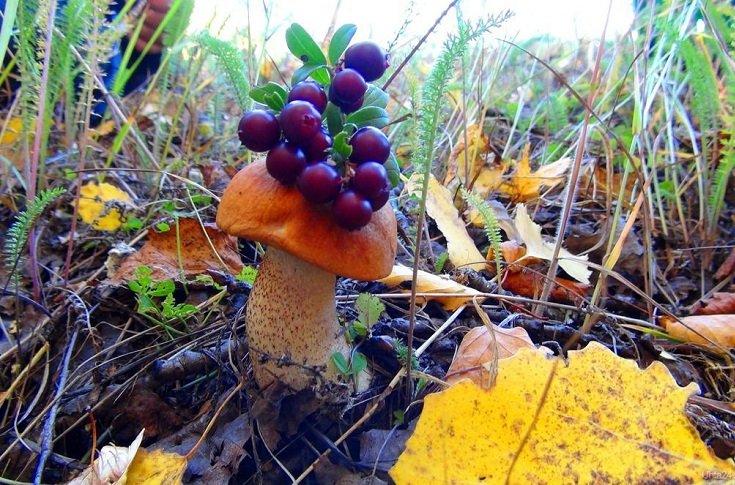 грибы и ягоды в лесу