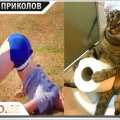 ПРИКОЛЫ 2019 Сентябрь #559 ржака угар прикол - ПРИКОЛЮХА видео