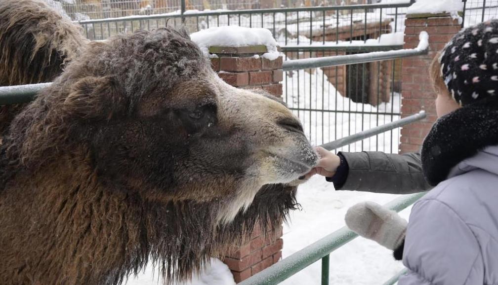 цена зоопарк лимпопо