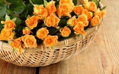 Как правильно ухаживать за комнатной розой в домашних условиях