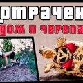Содом и черепахи | ПОТРАЧЕНО видео