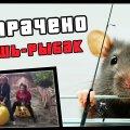 Мышь-рыбак | ПОТРАЧЕНО видео
