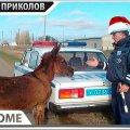 ПРИКОЛЫ 2019 Декабрь #585 ржака угар прикол - ПРИКОЛЮХА видео