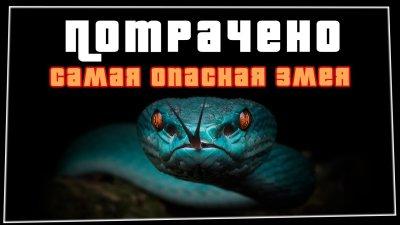 Самая опасная змея | ПОТРАЧЕНО видео