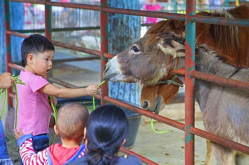 Кормление животных в зоопарке Siracha Tiger Zoo