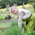 Как избавиться от сорняков в саду и на огороде