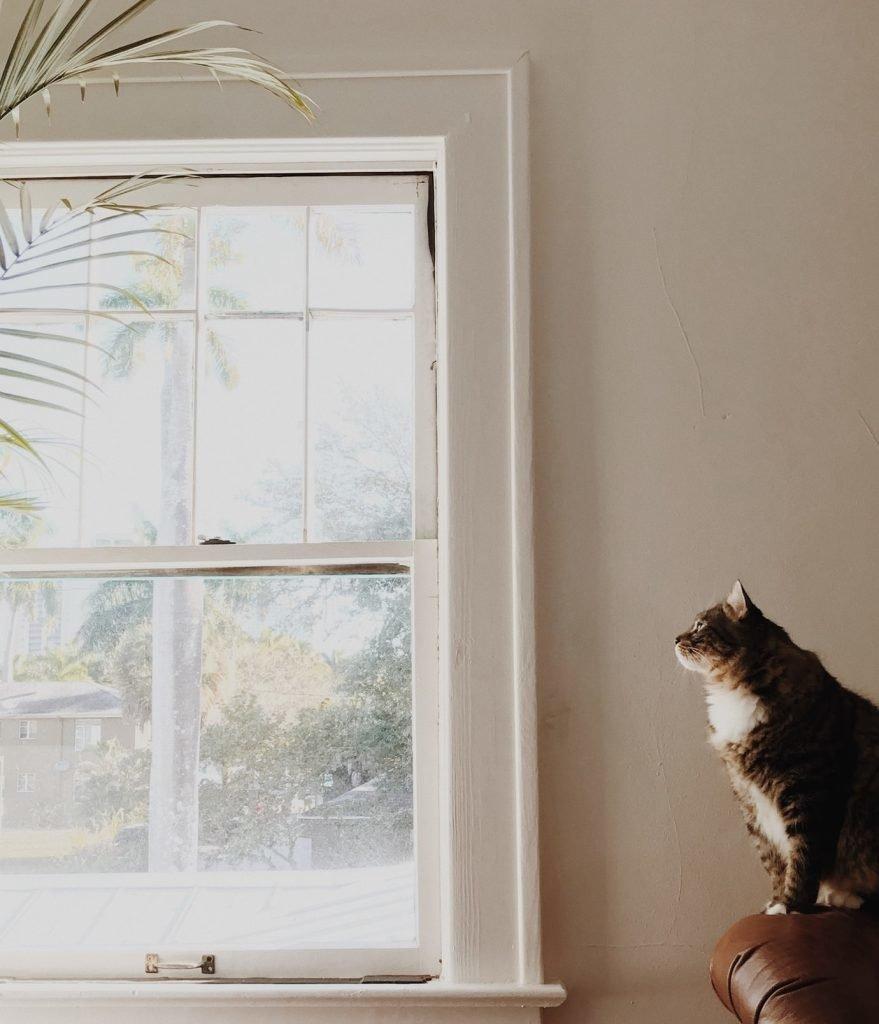 Кот сидит у окна