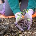 Садовые работы в мае. Что нужно успеть сделать?