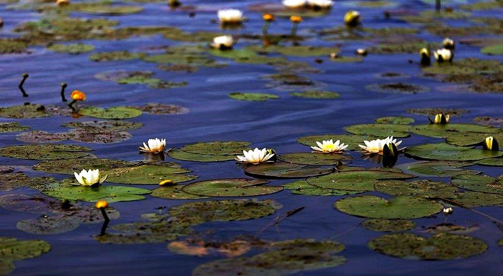 Озеро в Украинском Полесье