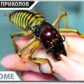 ПРИКОЛЫ 2020 Май #25 ржака угар прикол - ПРИКОЛЮХА видео