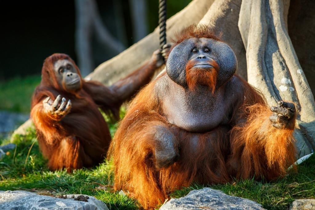 Дублинский зоопарк