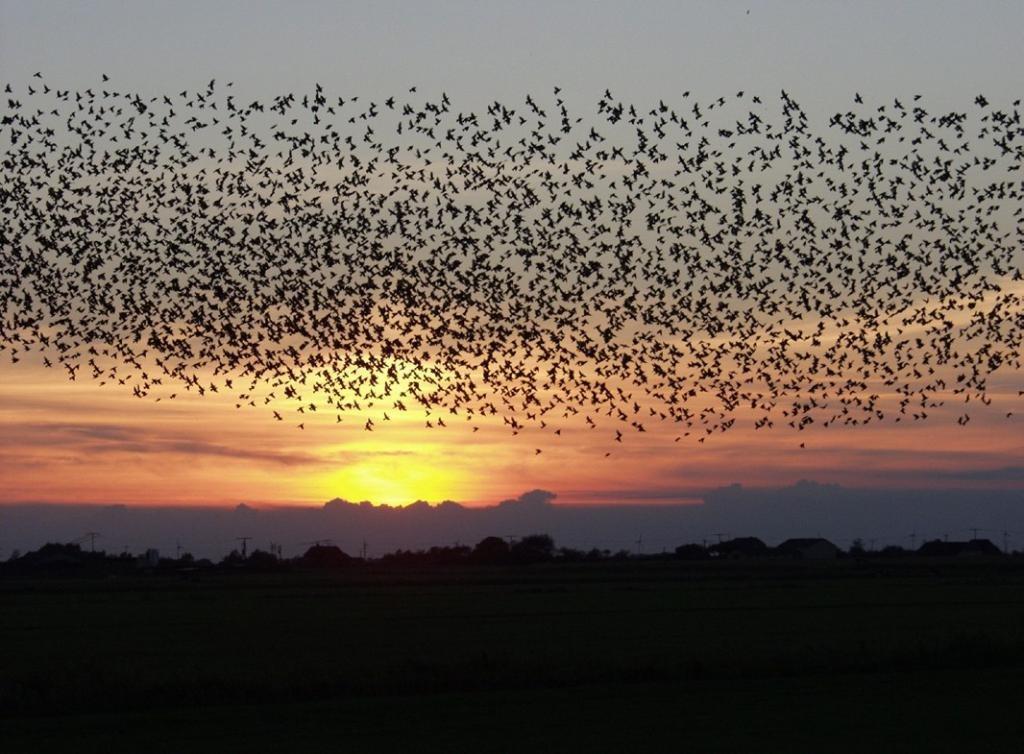 Миграция ласточек