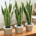 10 комнатных растений для каждого дома