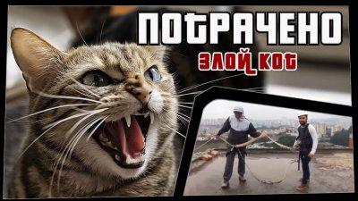 ПОТРАЧЕНО. Злой кот. Лучшие приколы 2020 за неделю, смешные видео видео