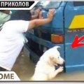 ПРИКОЛЫ 2020 Август #55 ржака угар прикол - ПРИКОЛЮХА видео
