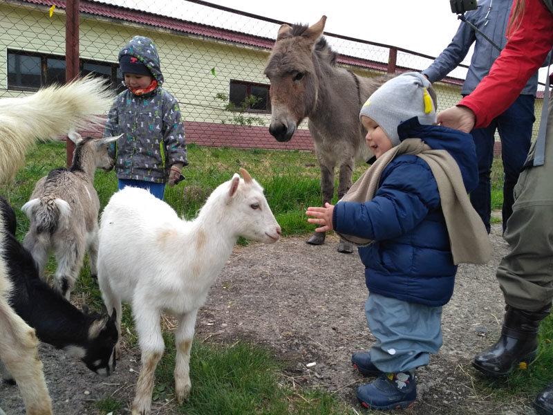 Ферма  Русский страус