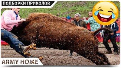 ПРИКОЛЫ 2020 Декабрь #107 ржака угар прикол - ПРИКОЛЮХА видео