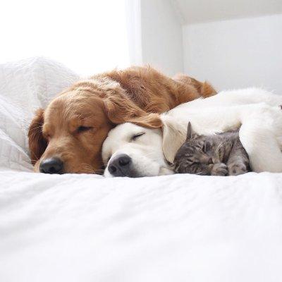 Фотоистория о жизни с двумя собаками и котом