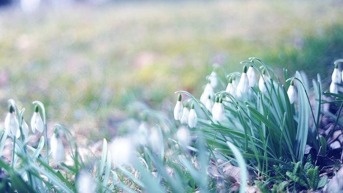 природа в марте