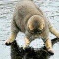 Приколы с котами - ТОПовая подборка! видео