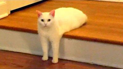 Приколы с Котами - Смешные кошки приколы про кошек и котов 2021 видео