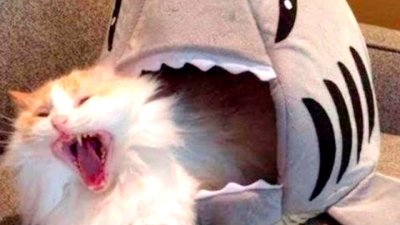 Приколы с Котами — Лучшие приколы с котами и кошками коты видео видео