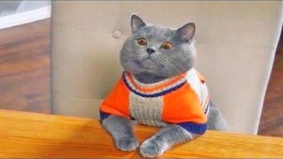 Приколы с Котами - Смешные коты и кошки 2021 | ПОПРОБУЙ НЕ ЗАСМЕЯТЬСЯ - смешное видео про котов видео