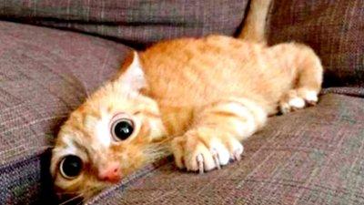 Приколы с Котами - Смешные коты и кошки 2021 |  ПОПРОБУЙ НЕ ЗАСМЕЯТЬСЯ - Смешные коты видео