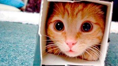 Приколы с Котами - Смешные коты и кошки 2021 || Смешное Видео Корпорация Зла видео
