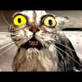Приколы с котами и кошками | Приколы с животными. Приколы лучшие приколы 2021 видео