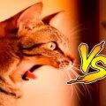 Коты vs Огурцов - Приколы с котами видео