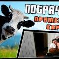 Прятки с коровой | ПОТРАЧЕНО видео